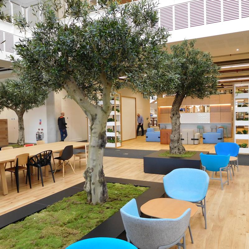 Kunst olijfbomen